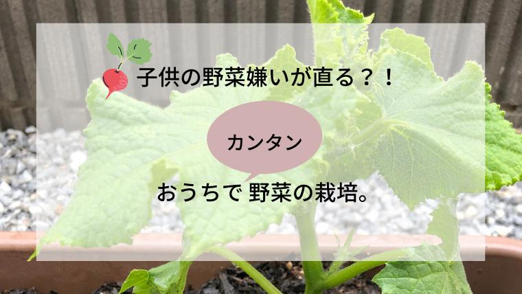 マイホームで野菜を育てよう。子供の好き嫌いもこれで解決。