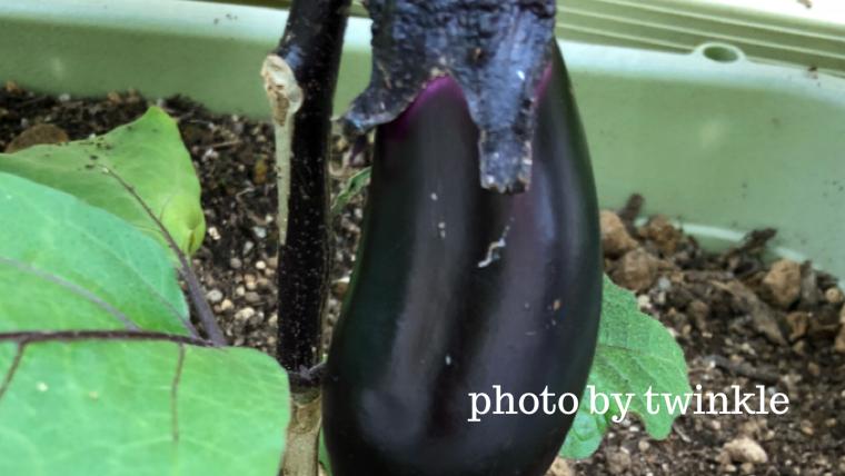 マイホームで子供と野菜を育てるメリット